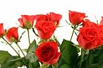 Saulėti linkėjimai iš rožių šalies