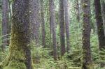 Mokslininkė B. Galdikas atkreipė dėmesį į kertamus miškus ir ragina atsisakyti palmių aliejaus