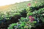 Augalų apsaugos priemonės. Pesticidų poveikio žmonių sveikatai keliamos rizikos mažinimas