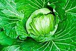 Raugintų kopūstų dieta - viena efektyviausių žiemą