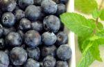 Mėlynės ir jų lapai – sveikatai gerinti