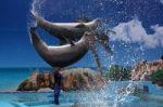 Ministerijos apdovanojimai: delfinų terapija padeda įveikti negalią