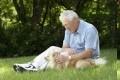 Pavasaris primena apie šunų ir kačių platinamas parazitines ligas