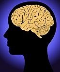 Google padėjo sukurti patį detaliausią dalies žmogaus smegenų jungčių vaizdalapį ir tyrėjai iškart padarė atradimą
