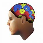 Jūsų smegenys turi daugiau bendro su sėklidėmis nei manote