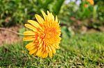 Organizmą stiprinkime raktažolėmis, šalpusniais, vaismedžių lapais ir žiedais