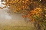 Kaip kuo sveikesniam sutikti gyvenimo rudenį?