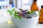 Laukiniai augalai – kurie naudingi sveikatai, o kurių geriau nerinkti?