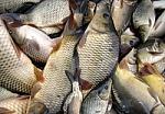 Prieššventinė prekyba gyvomis žuvimis: pateiktos rekomendacijos prekybininkams ir organizuojama intensyvesnė priežiūra